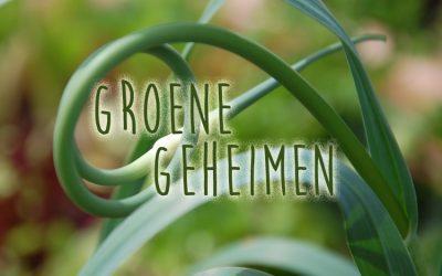 Groene geheimen: Slangenknoflook
