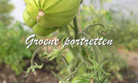 Groene portretten: Tomaten
