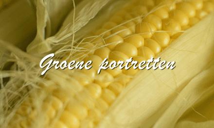 Groene portretten: Mais