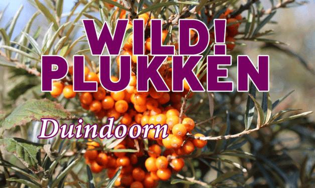 Wildplukken: Duindoorn