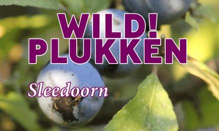 Wildplukken: Sleedoorn en andere bessen