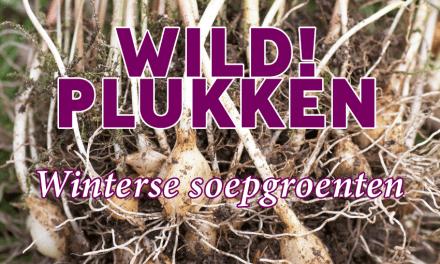 Wildplukken: Winterse soepgroenten