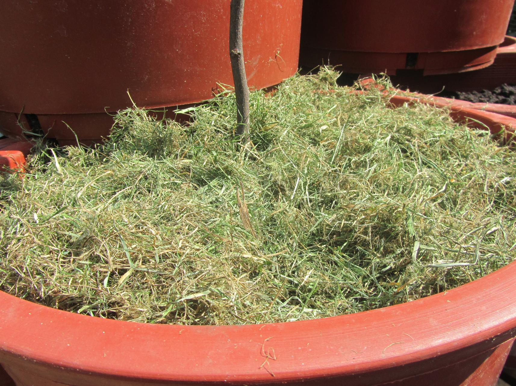 Verbazingwekkend Dorstige planten: Water geven tijdens je vakantie - Stadstuinieren HN-57