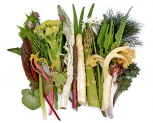 vaste groenten1
