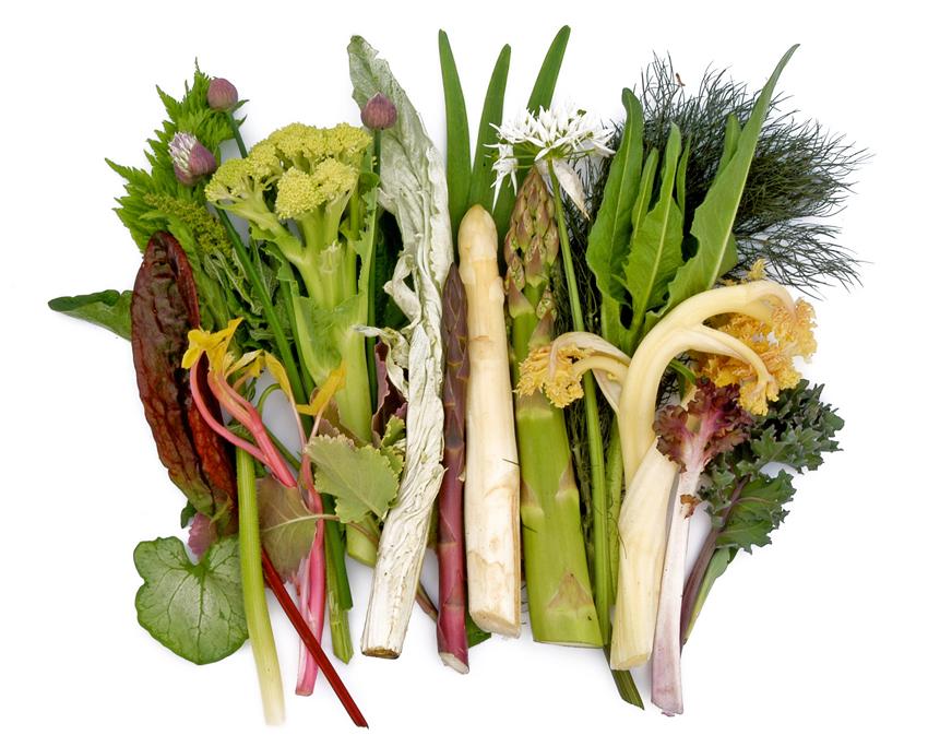 Vaste groenten in de moestuin stadstuinieren for Groenten tuin
