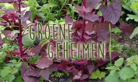 Groene geheimen: Rode Tuinmelde