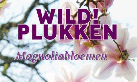 Wildplukken: Magnoliabloemen