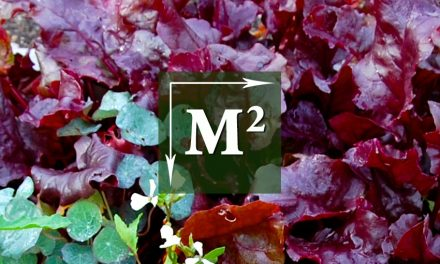 Vierkante-Meter-Tuin: Bietjes