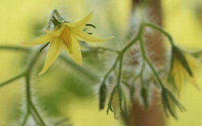 Stella's Wereld: Het verhaal van de bloemetjes en de bijtjes
