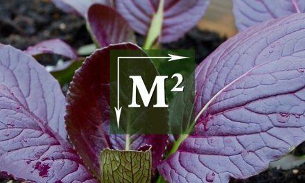 Vierkante-Meter-Tuin: Paksoi