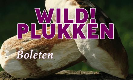 Wildplukken: Op zoek naar boleten