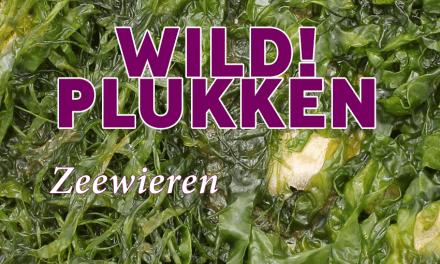 Wildplukken: Zeewieren Hollandse Sushi?