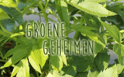 Groene geheimen: Engelwortel