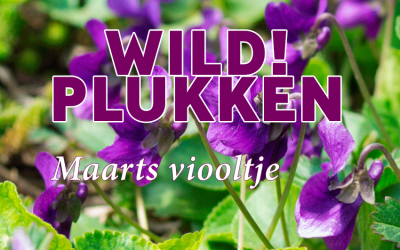 Wildplukken: Maarts Viooltje