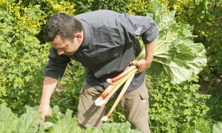 De kok en zijn moestuin: Geert Groffen
