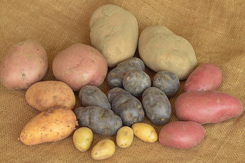 Groene Portretten: Aardappels
