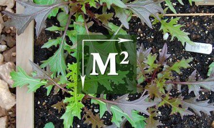 Vierkante-Meter-Tuin: Mosterdblad