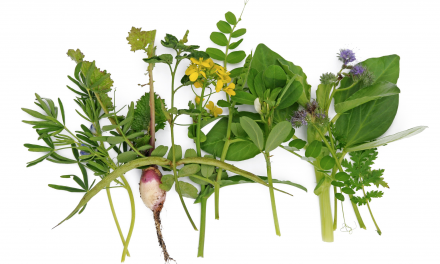 Groeivoeding: Planten voor planten