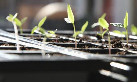 Zaaien en oogsten: januari en februari
