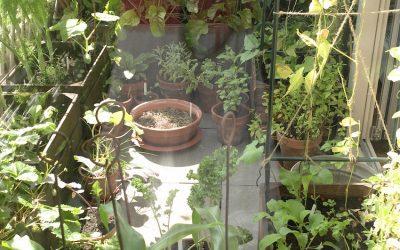10 tips voor een eetbaar balkon