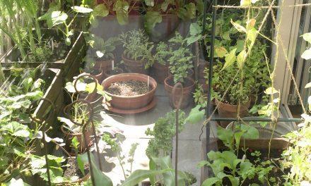 Groen balkon: Tuinieren op vier hoog