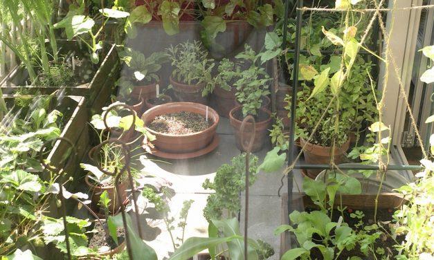 Tuinieren Op Balkon : Balkon archieven stadstuinieren