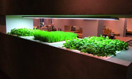 Optimale oogst met led-verlichting