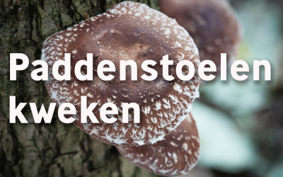 Eetbare paddenstoelen kweken