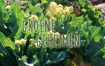 Groene geheimen: Nine Star meerjarige broccoli