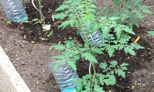 Laat je planten niet verbranden – Tip van Taco