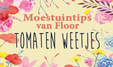 Moestuintips van Floor: Tomatenweetjes