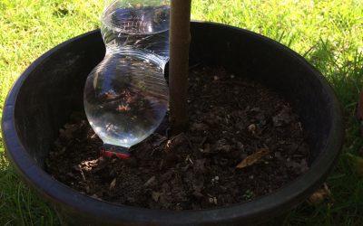 Planten in potten en kuipen – Tip van Taco