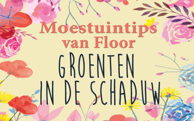 Moestuintips van Floor: Groenten in de schaduw