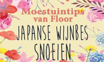 Moestuintips van Floor: Japanse wijnbes snoeien