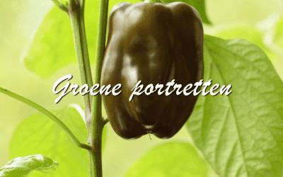 Groene portretten: Paprika