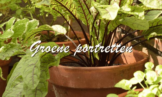 Groene portretten: Zuring