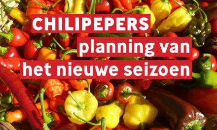 Chilipepers: Planning van het nieuwe seizoen