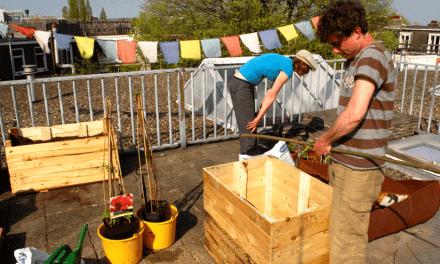 Cashew way of life: Permacultuur op het dakterras