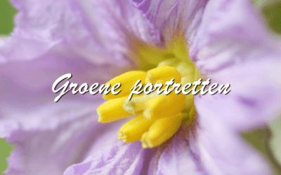 Groene Portretten: Aubergine