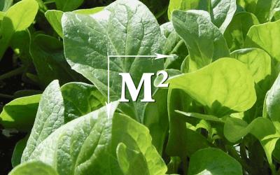 Vierkante-Meter-Tuin: Kies je gewas
