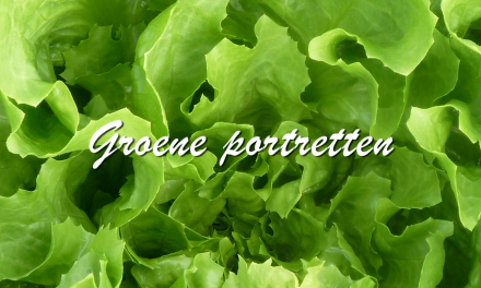Groene portretten: Andijvie
