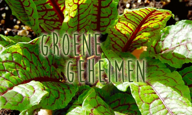 Groene geheimen: Bloedzuring