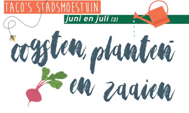 Taco's Stadsmoestuin: juni en juli (2)