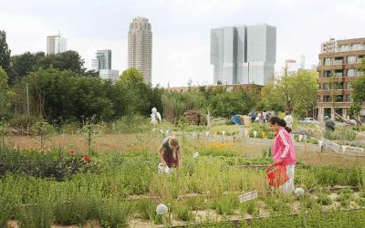 Rotterdamse Munt: Een geurige oase in de stad