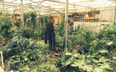 Tuinieren in de kas: Exotische sferen in Almere Buiten