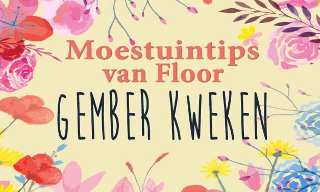 Moestuintips van Floor: Gember kweken