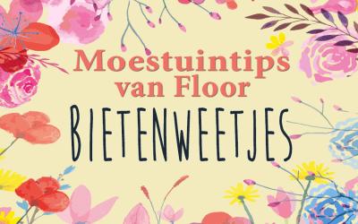 Moestuintips van Floor: Bietenweetjes
