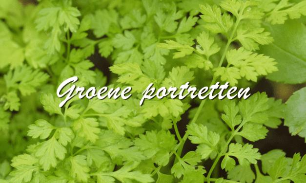 Groene Portretten: Kervel