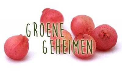 Groene geheimen: Blauwe bes – Pink Lemonade