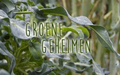 Groene geheimen: Spigariello Bladbroccoli